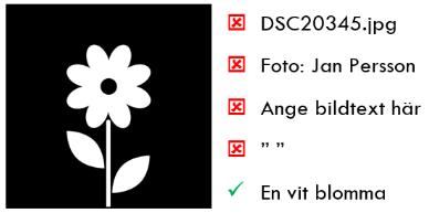 Pictobild som föreställer en blomma. Bredvid står några olika exempel på dåliga textbeskrivningar (dsc20345.jpg, Foto; Jan Persson, Ange bildtext här, och mellanslag) och ett bra exempel: En vit blomma